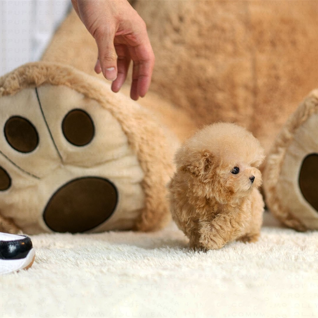 $22.99 Last day promotion🔥Realistic Teddy Dog