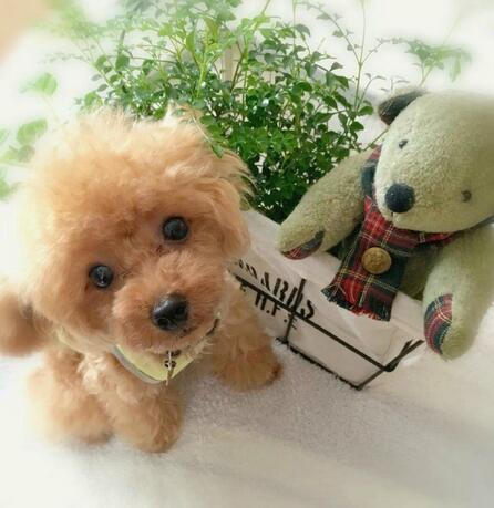 🔥$19.99 Only Last 2 Days🔥Realistic Teddy Dog Lucky