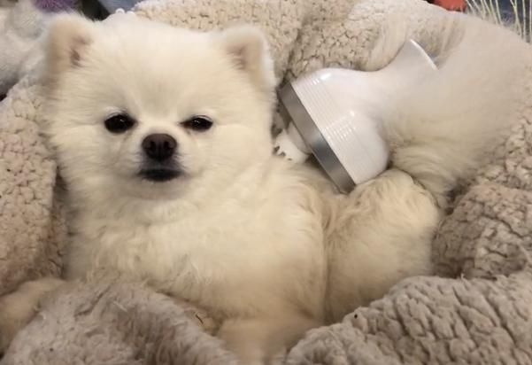 A massager that makes dogs and cats happy.