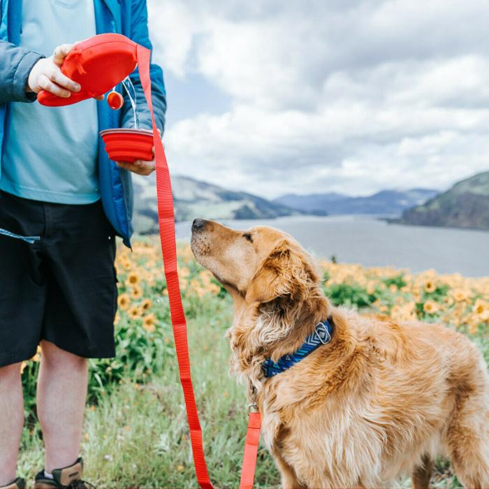 50% OFF - 5 DOG WALKING ESSENTIALS ALL IN ONE !
