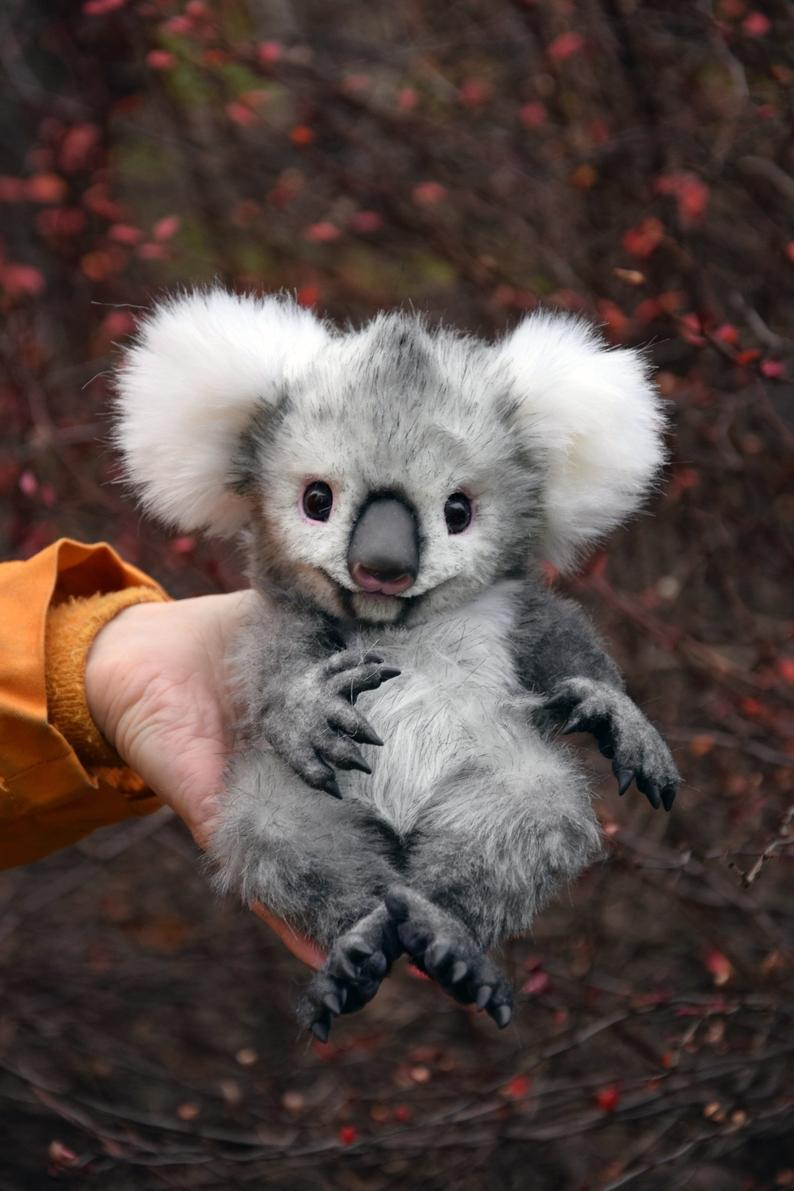 Koala, Whimsical Animals