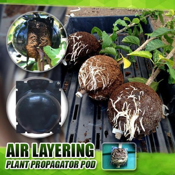 2020 - Plant Root Growing Box