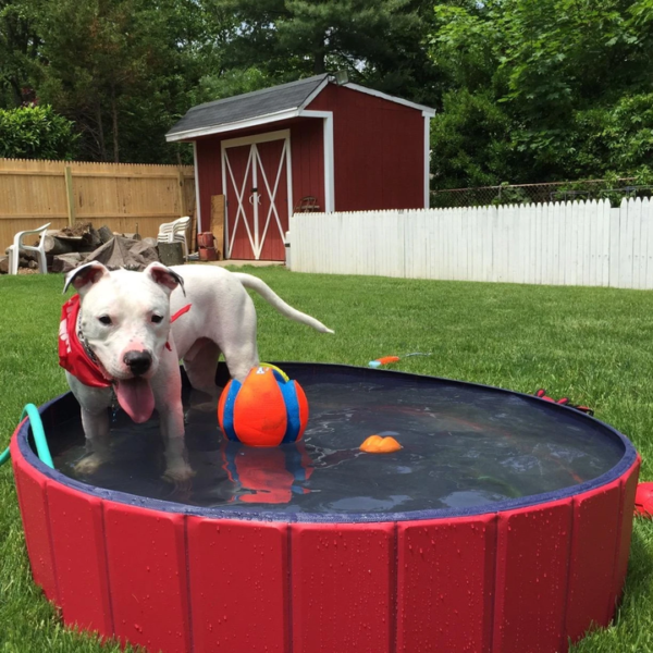 【40% OFF】💥PORTABLE PAW POOL