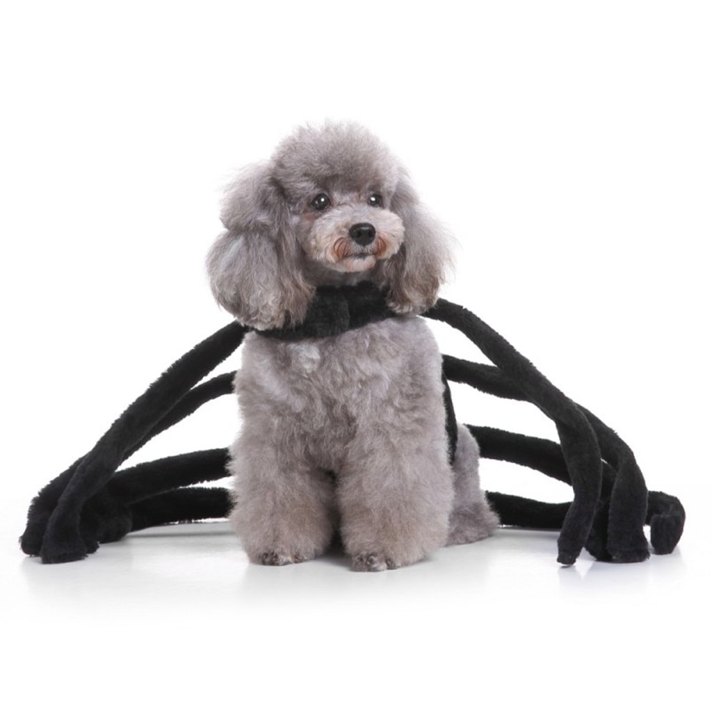 Cute Spider Costume For Dogs