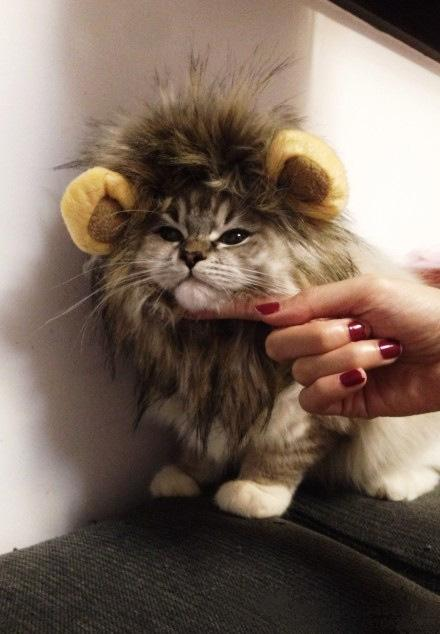 TURN YOUR KITTY INTO A LION WITH THIS LION MANE CAT HEADGEAR!(Buy 2 Free Shipping)