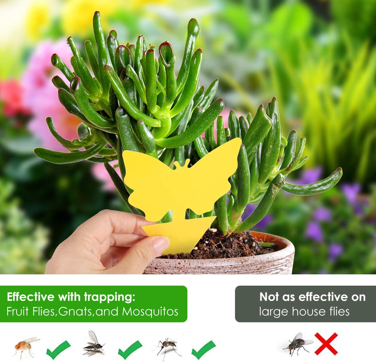 Summer Sale - Sticky Trap, Fruit Fly Fungus Gnat