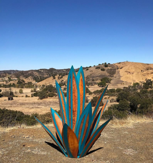 Hot Sales50% Off-Agave-Perfect for Garden