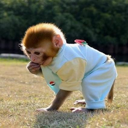 🔥$19.99 Only Last 2 Days🔥Realistic Monkey