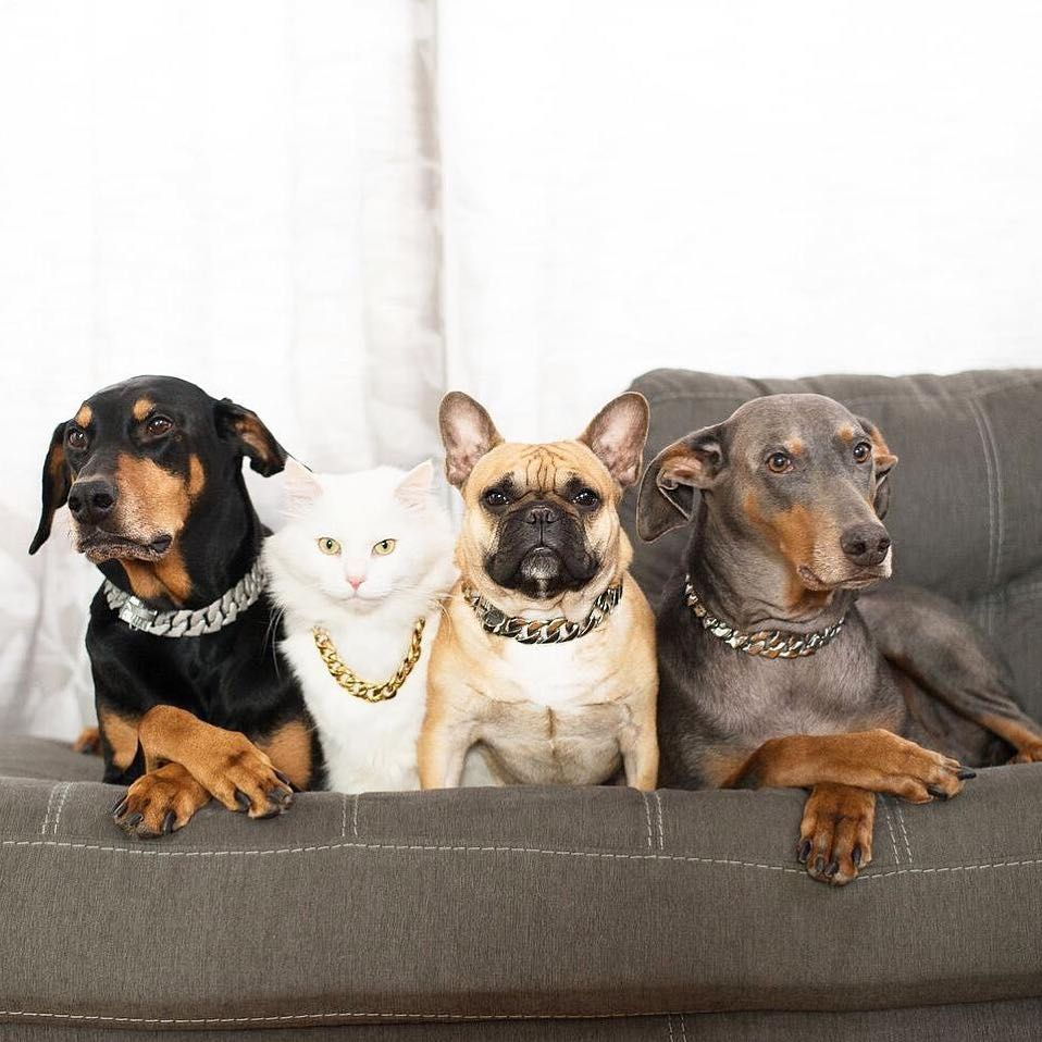 Thick Gold Chain Pets Safety Collar(Adjustable Length) - Buy 1 Get 1 Free Today!!!