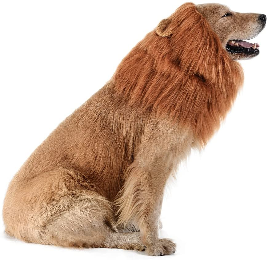 Lion Costume For Dog in Stock