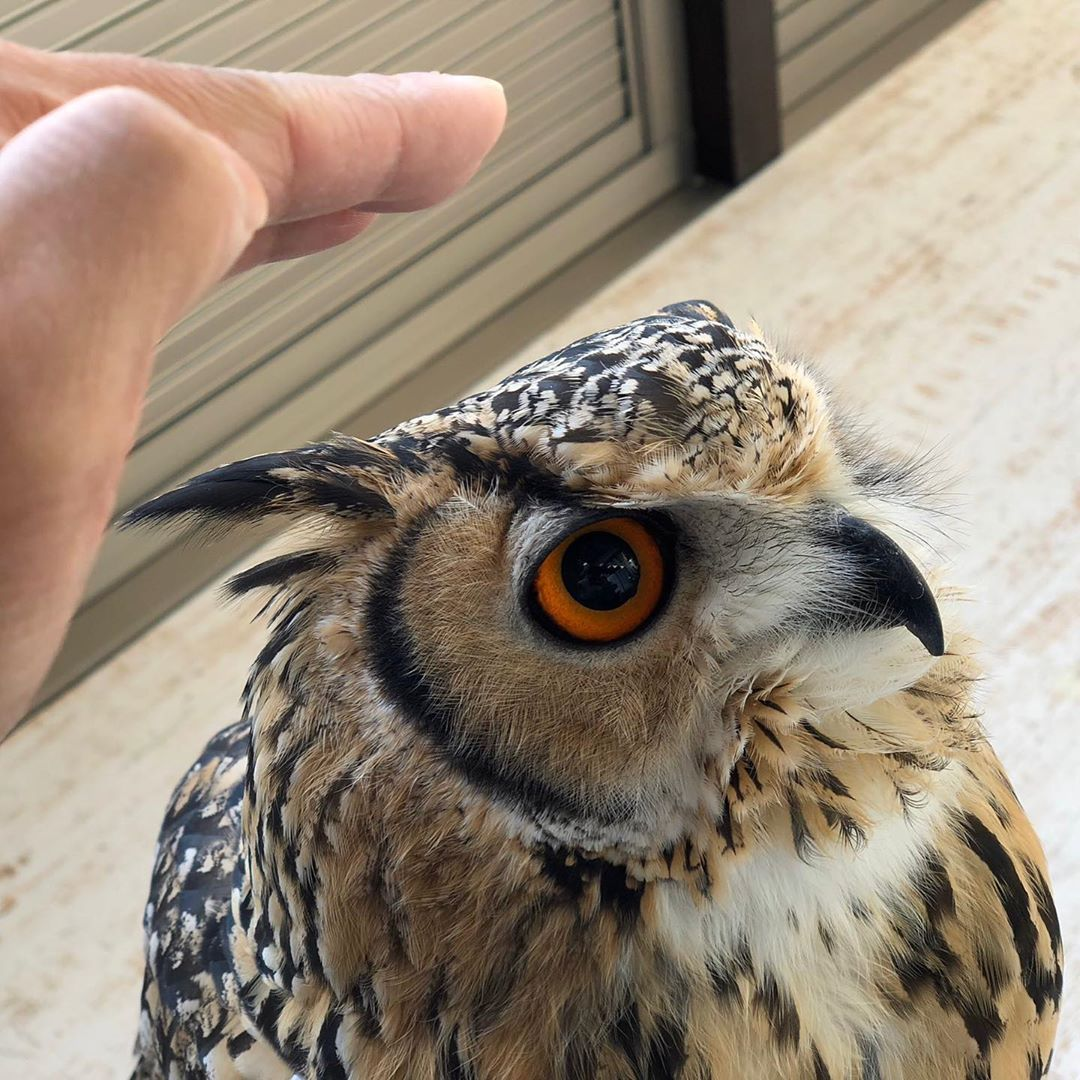 🔥$19.99 Only Last 2 Days🔥Realistic Owls