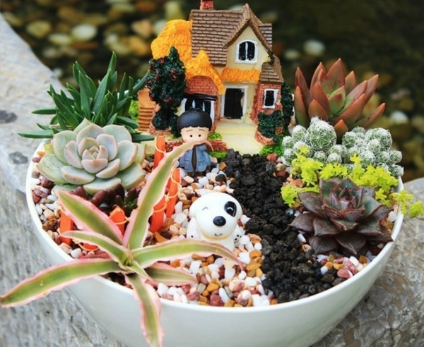 1000 pcs / pack  Mixed Succulent Seeds  juicy seeds Ass seed flower Living Stone bonsai