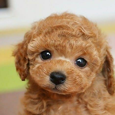 🔥Realistic Teddy Dog Lucky( Built-In Battery)