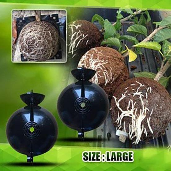 Plant Root Growing Box (3 PCS) 📢50% OFF