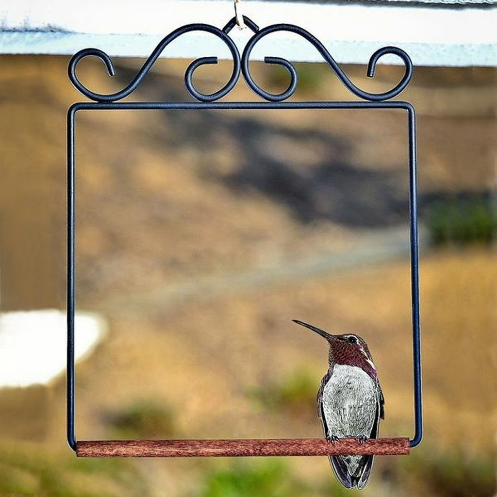 (Early Father's Day Promotions-50% OFF) Hummingbird Swing & BUY 3 GET 1 FREE