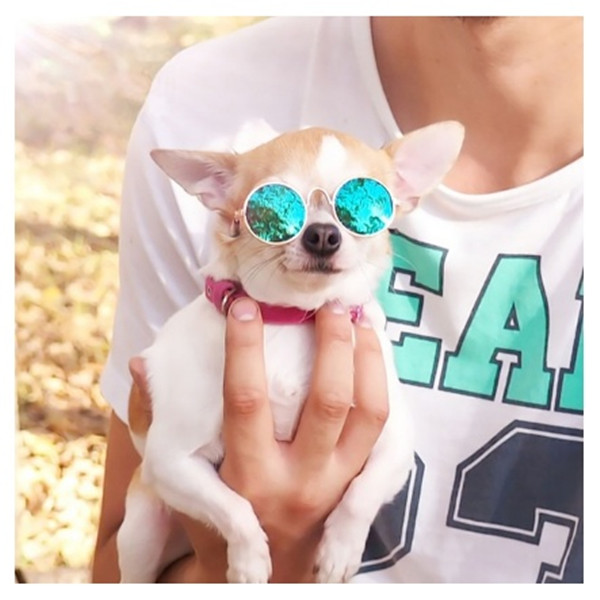 🐶Buy 2 and get $ 6 off🐱--Cool pet glasses
