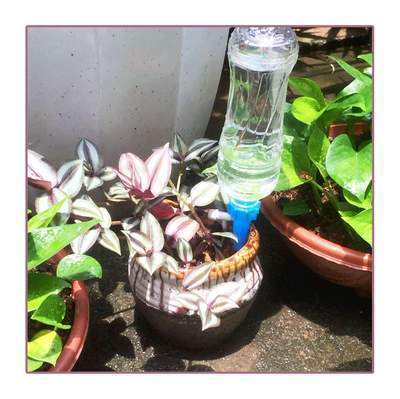 Higomore™ Plant Self Watering Spikes Devices