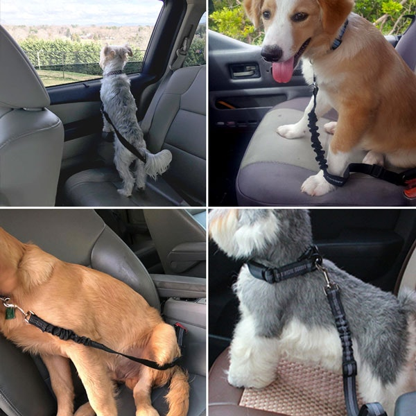 Dog Seat Belt (Buy Two Get One Free)