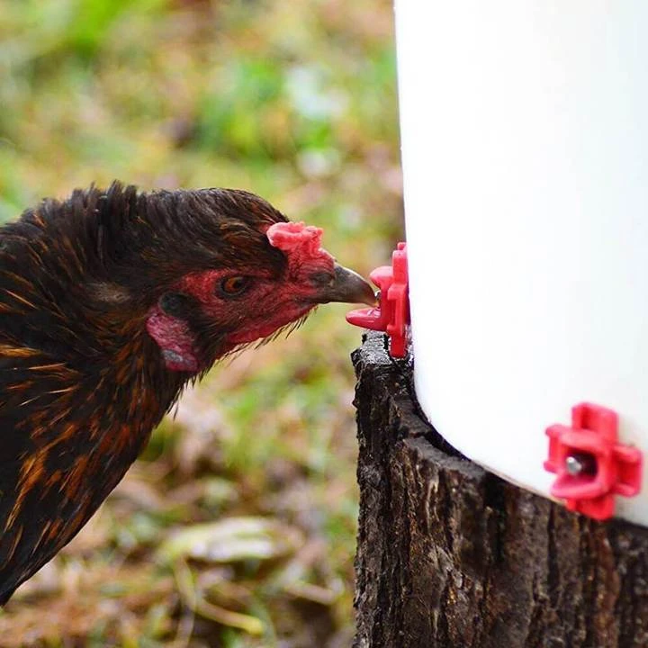 【BUY MORE SAVE MORE】Horizontal Side Mount Chicken Waterer