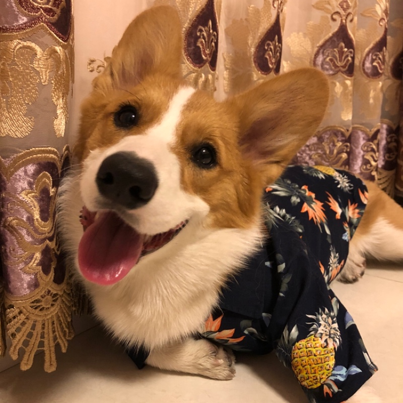 Puppy Dog Hawaiian Shirt