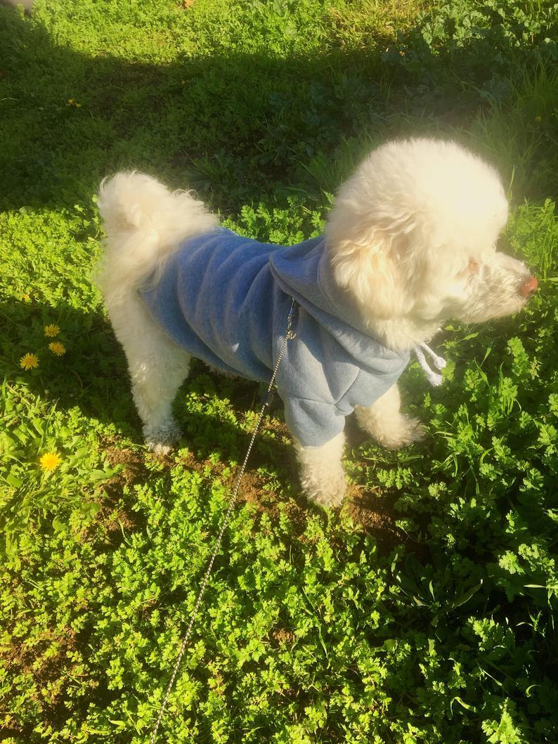Dog Hoodie, Small Dog Sweatshirt, Daddys Little Girl, Gray Shirt For Dog, Small Breed Top, Dog Clothes, Winter Clothing, Cat Sweater