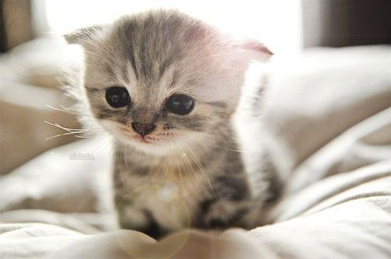 🔥Realistic Baby Cat —Bella (buy 2 free shipping!)