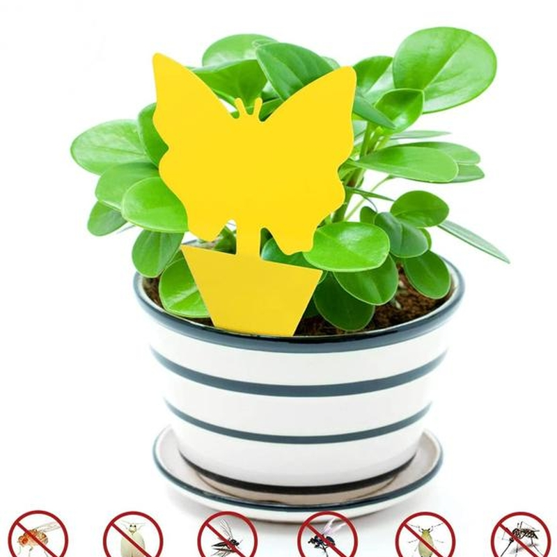 Protect the life of bonsai📢50% OFF