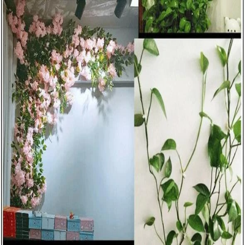 (BUY 1PCS / $1.09)Plant Climbing Wall Fixture