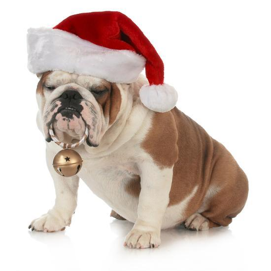 New Christmas Decorations for 2020 Years Pet Christmas Hat Dog Hat Plush Hat Santa Claus Hat for Cats Dogs Puppy Xmas Decoration