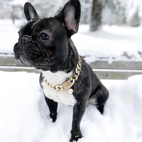 BUY 1 GET 1 FREE - THICK GOLD CHAIN PETS SAFETY COLLAR