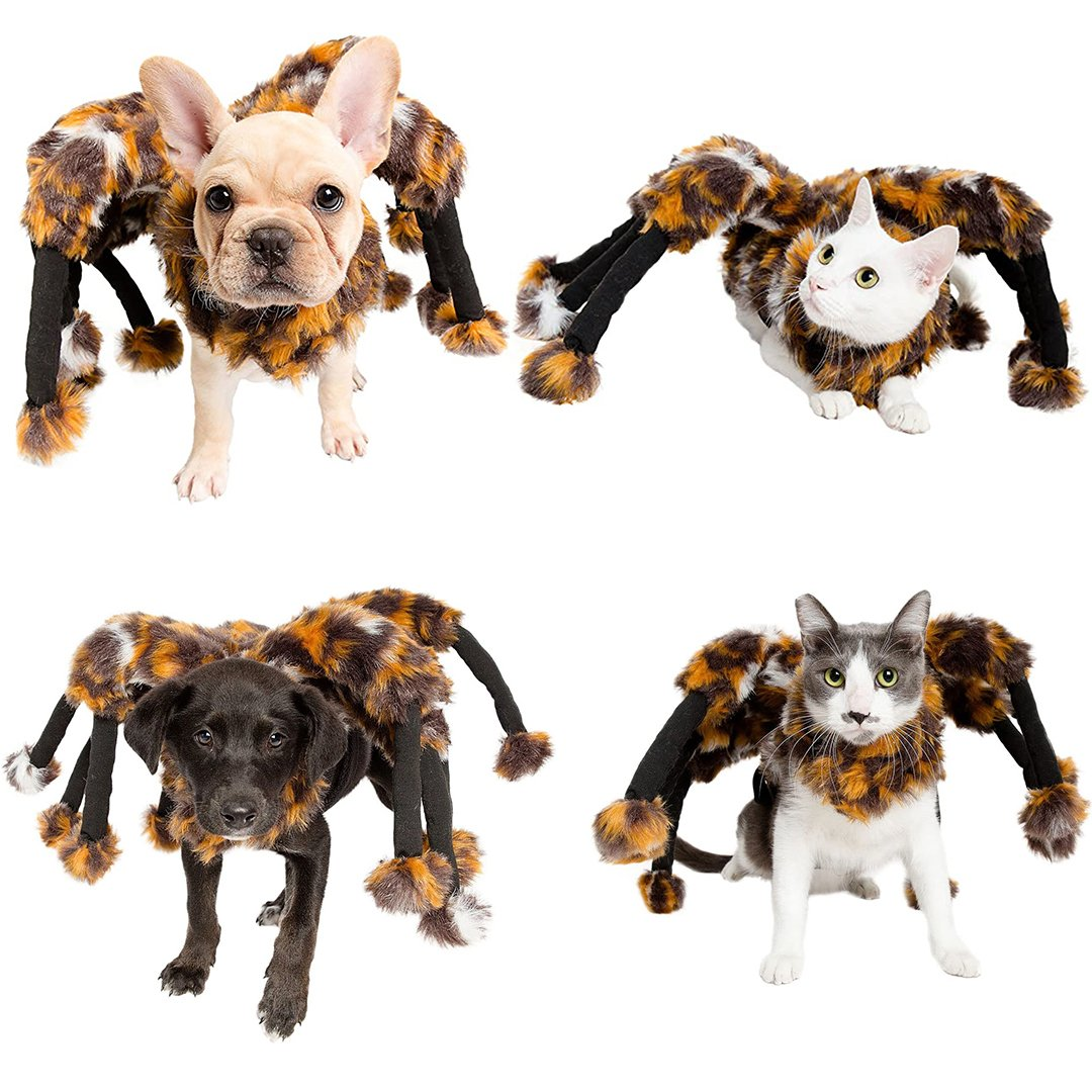 Halloween Spider Costume For Dogs & Cats