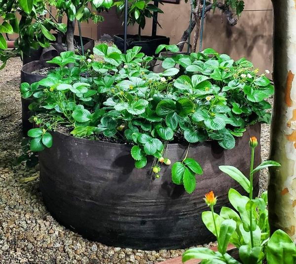 (Father's Day Sale-50% OFF) Garden Raised Planting Bed