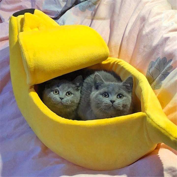 🐱🐱2020 Banana Cat Bed 🐈 Choose The Best For Your Cats!🐈
