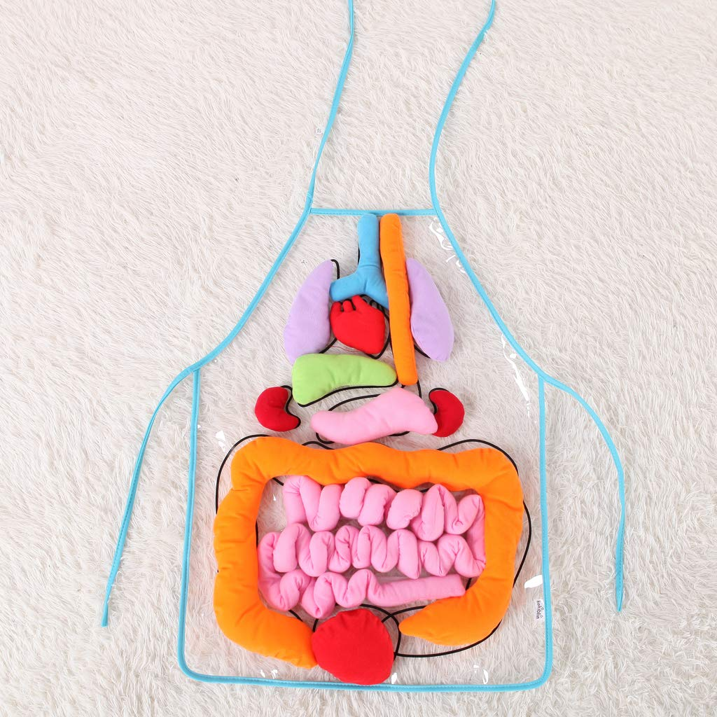 【Last Day Promotion】 50% OFF-Anatomy Apron【Best Educational Toys】