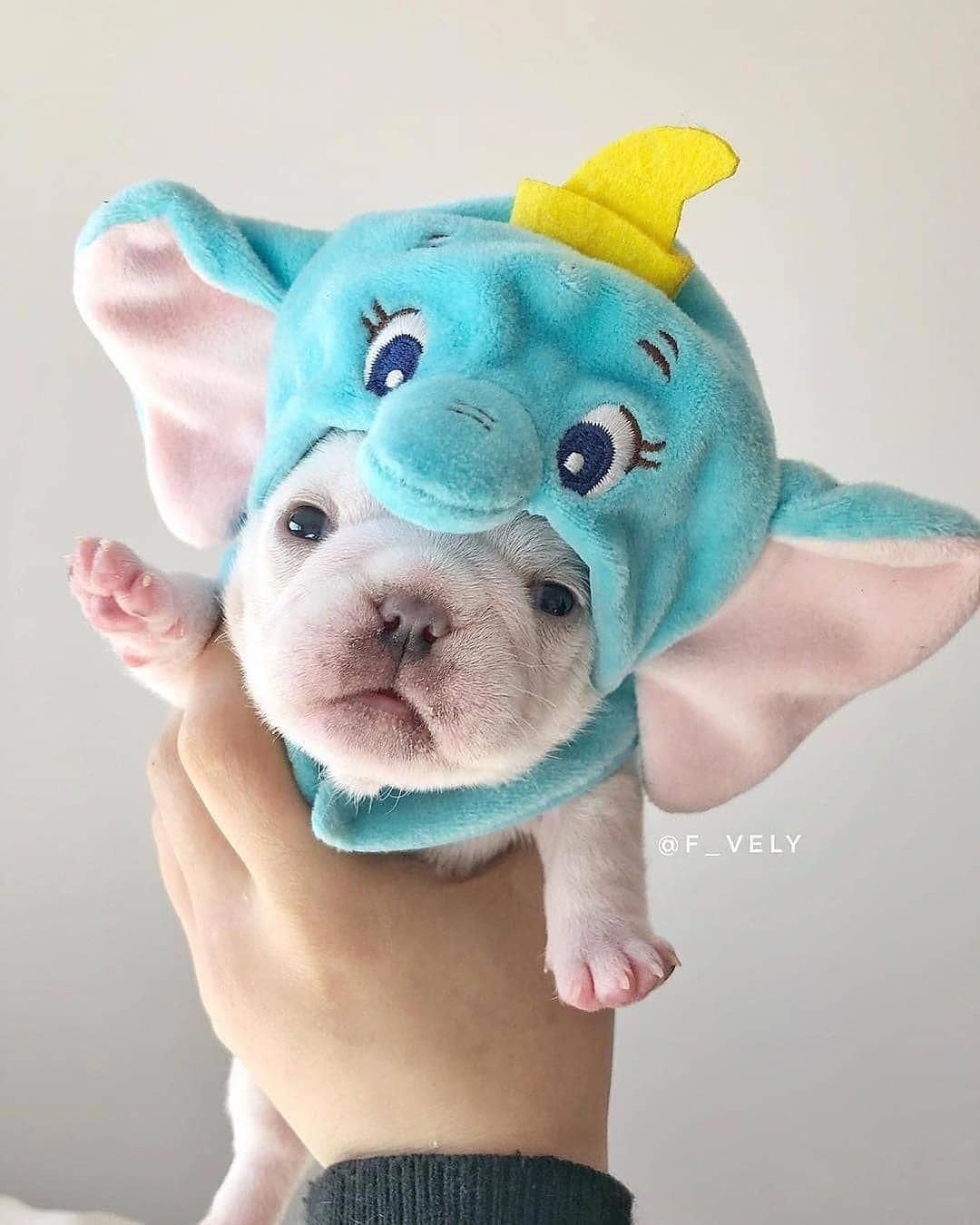 Realistic French Bulldog