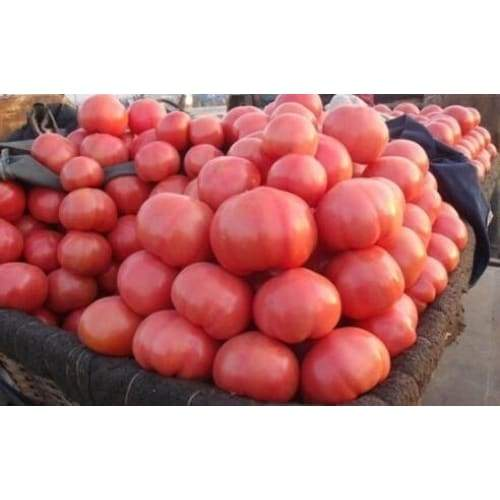 Pink Heirloom Tomato Seeds - 100 seeds Organic NON GMO